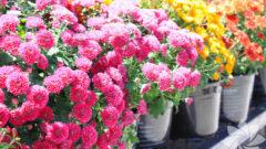 Evin Havasını Değiştiren Bitkiler